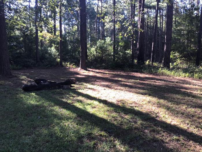 A photo of Site Site 01 of Loop Rocky Branch at Rocky Branch Seasonal Campground (SC) with Fire Pit, Shade