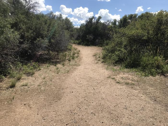 View of short trail leading to potential tent area within Campsite A-023