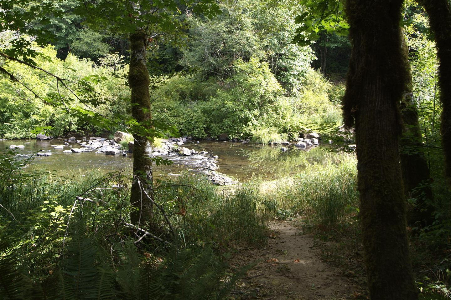 Siuslaw River Access.Access to Siuslaw River from Whittaker Campground.