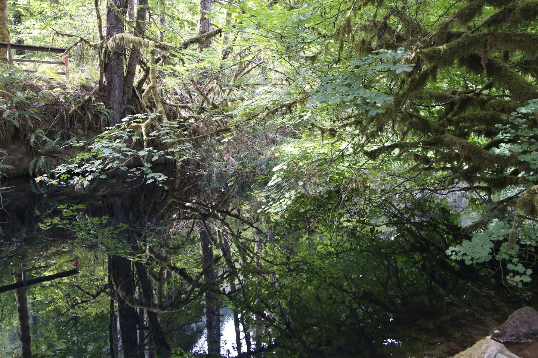 Whittaker Creek reflection.Whittaker Creek