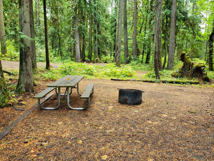 site 5 picnic table and fire ring