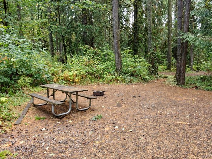 site 6 picnic table and fire ring