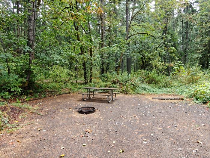 site 7 picnic table and fire ring