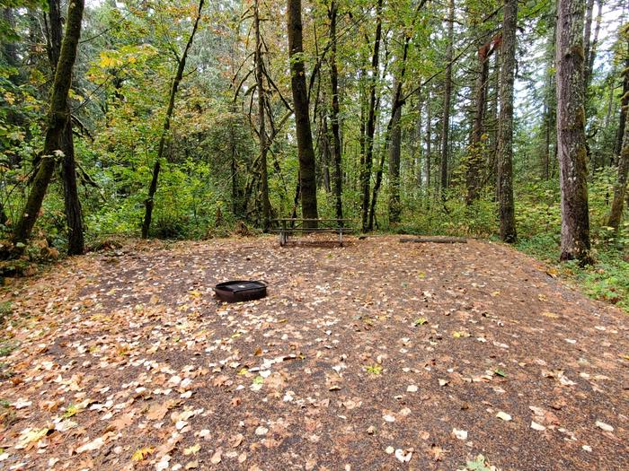 site 8 picnic table and fire ring