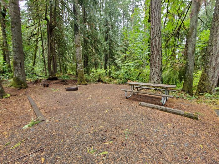 site 10 picnic table and fire ring