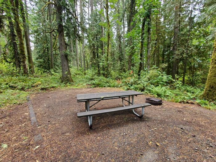 site 11 picnic table and fire ring