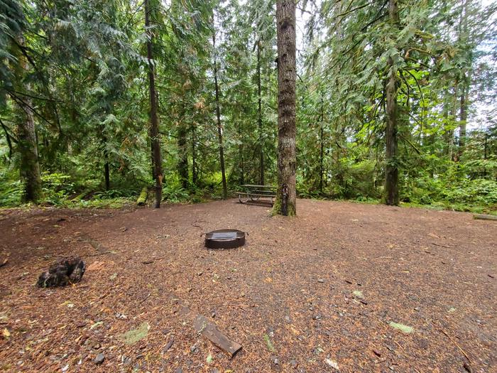 site 13 picnic table and fire ring