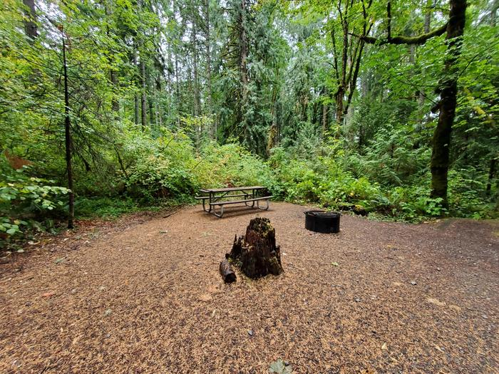 site 14 picnic table and fire ring