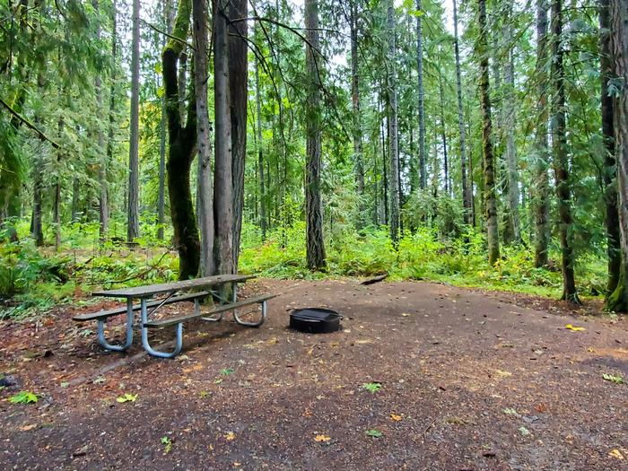 site 16 picnic table and fire ring