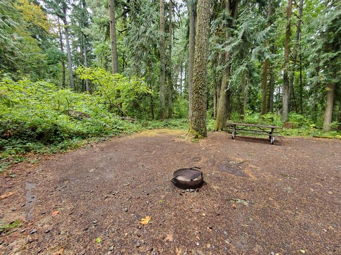 site 18 picnic table and fire ring