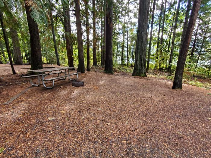 site 20 picnic table and fire ring