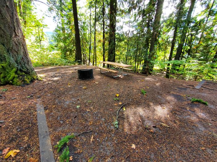 site 24 picnic table and fire ring