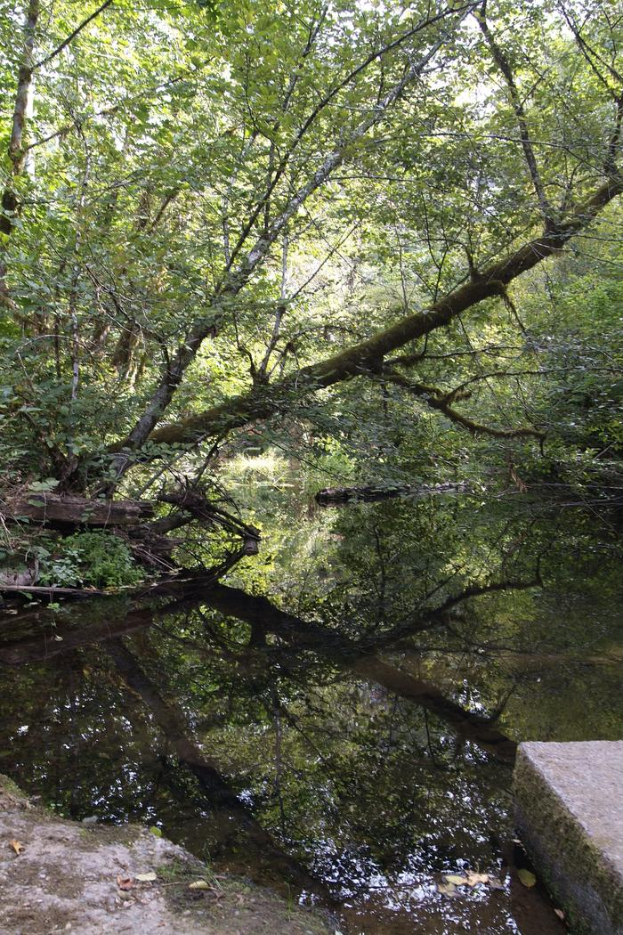 View of Whittaker Creek from the vehicle bridge for the campground. Whittaker Creek.