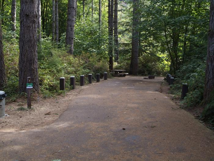 Camp site 8: large site with table, fire ring, tent pad, and Siuslaw River access. Includes connecting trail to camp site 9.Camp site 8: large site with table, fire ring, tent pad, and Siuslaw River access. Includes connecting trail to camp site 9.