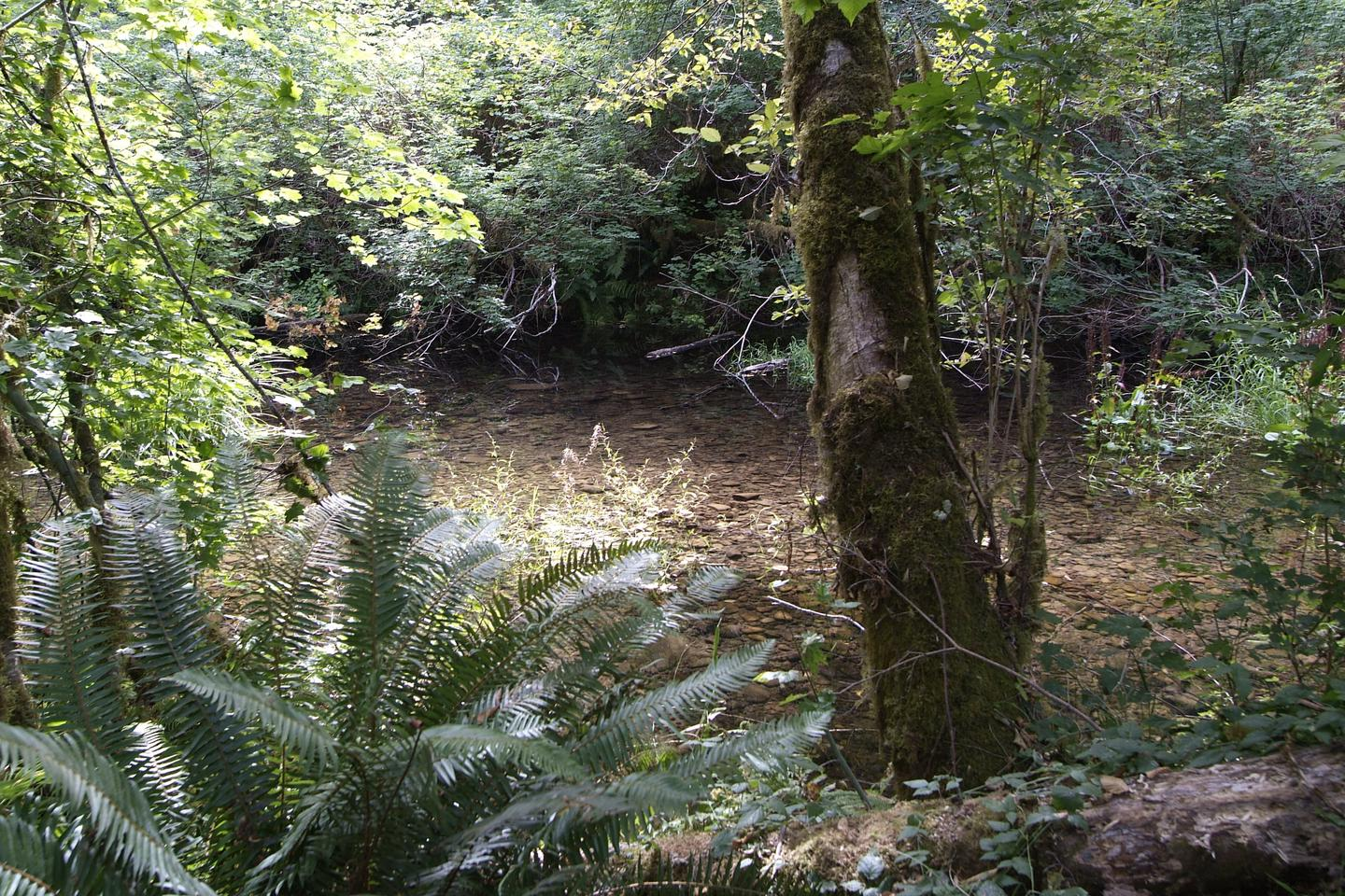 Whittaker Creek access for camp site 17. Camp site 17 Whittaker Creek access.