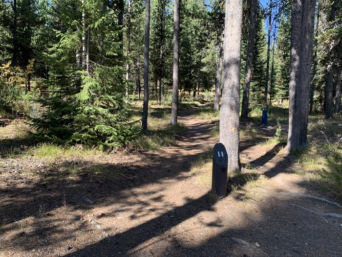 A photo of Site 11 of Loop Main Road at Lizard Creek Campground with Picnic Table, Fire Pit, Shade, Food Storage