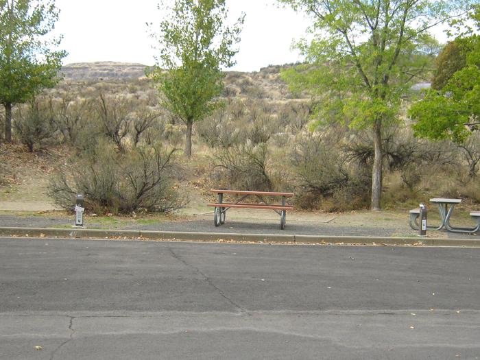 Back in paved parking with brush in brush in the background.Site 40