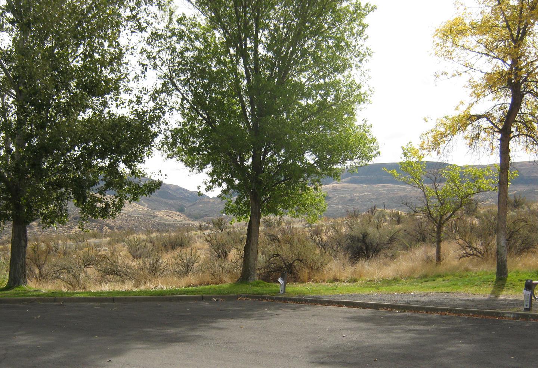 Site 54 - Alternate ViewAlternate view of Site 54. Trees and Sagebrush in background.