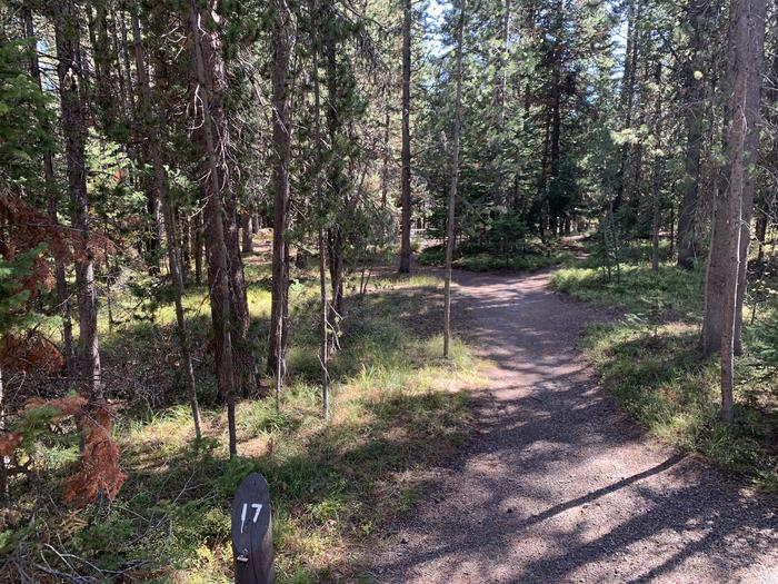 A photo of Site 17 of Loop Main Road at Lizard Creek Campground with Picnic Table, Fire Pit, Shade, Food Storage