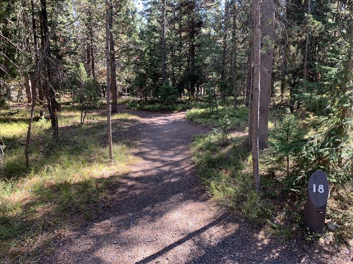 A photo of Site 18 of Loop Main Road at Lizard Creek Campground with Picnic Table, Fire Pit, Shade, Food Storage