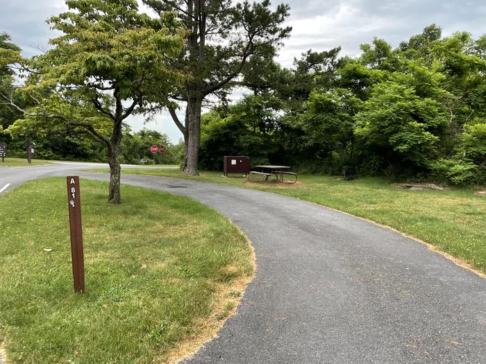A photo of Site A081 of Loop A Loop at Loft Mountain Campground with Picnic Table