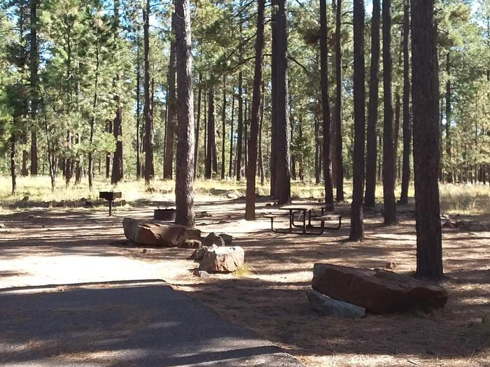 Site 4 with campfire ring, picnic table, and trees.Campsite 4 with table, campfire, and grill area.