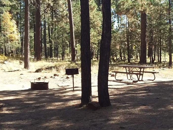 Site 6 with campfire ring, grill, two trees, and a tableCampsite 6 includes a campfire ring grill and picnic table.