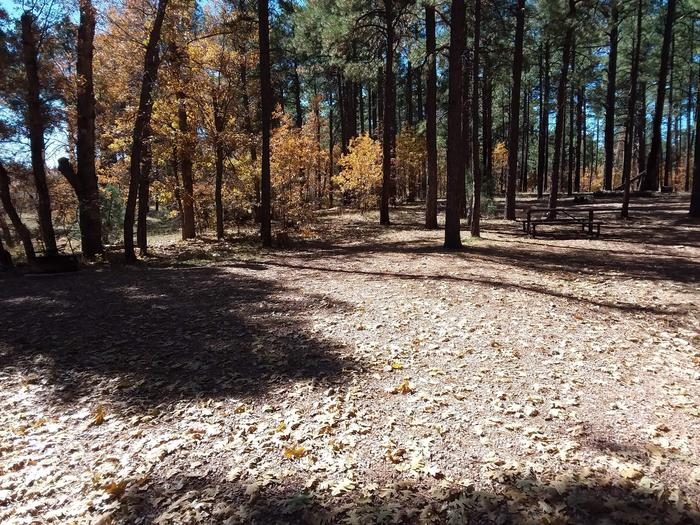 Site 10 with picnic table, fire ring, and shaded by surrounding forest.