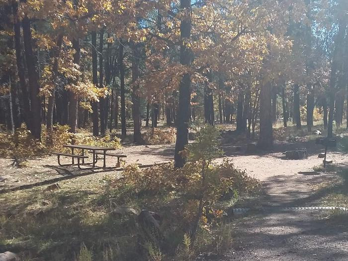 Site 48 with many trees, and visible bench and grill.Campsite 48 With its, bench, grill, and fire area.