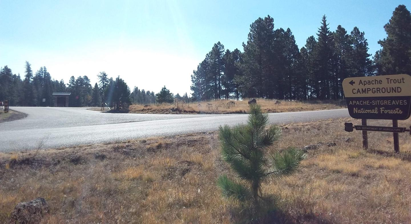Apache Trout Campground entrance