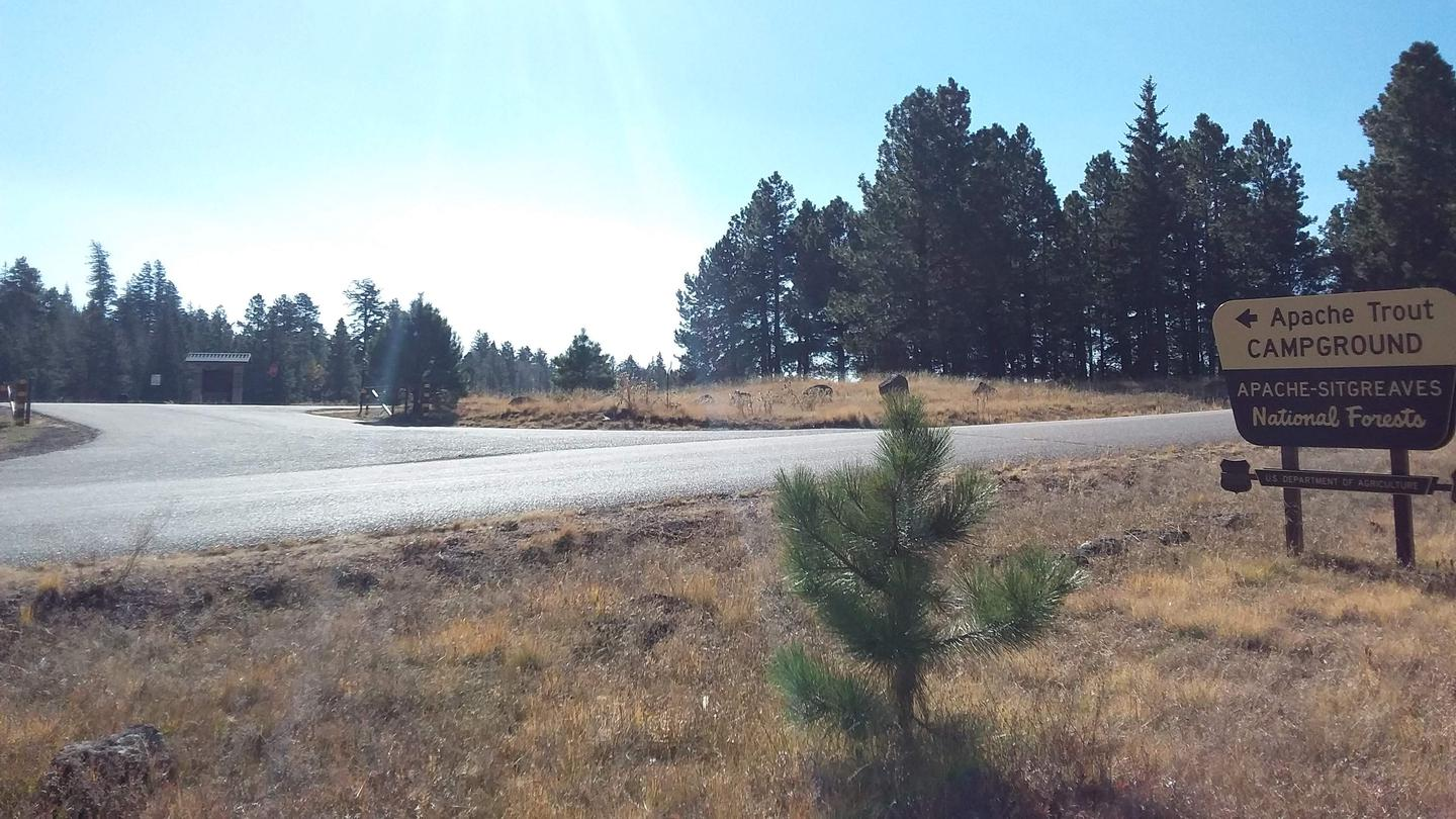 Apache Trout Campground entrance from road