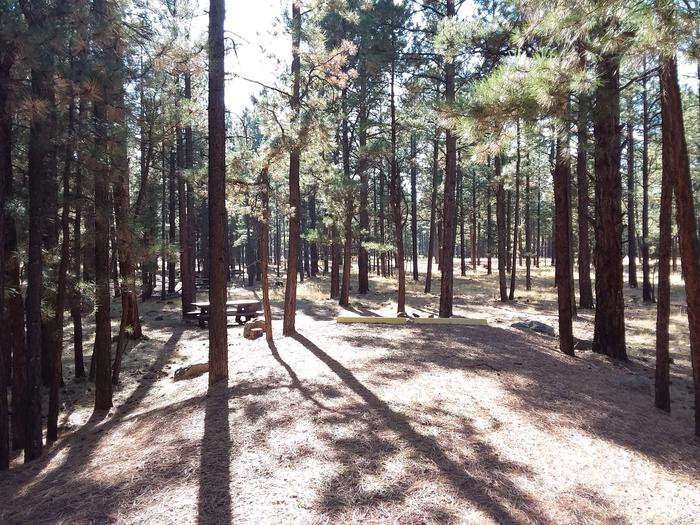 Grouse Loop Site 14 partially shaded with picnic table and surrounded by forest