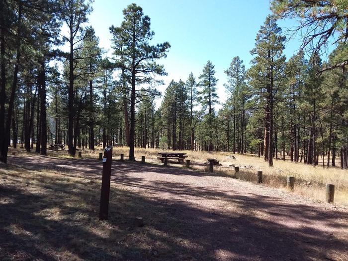 Site 19 with a picnic table, campfire ring, and parking.