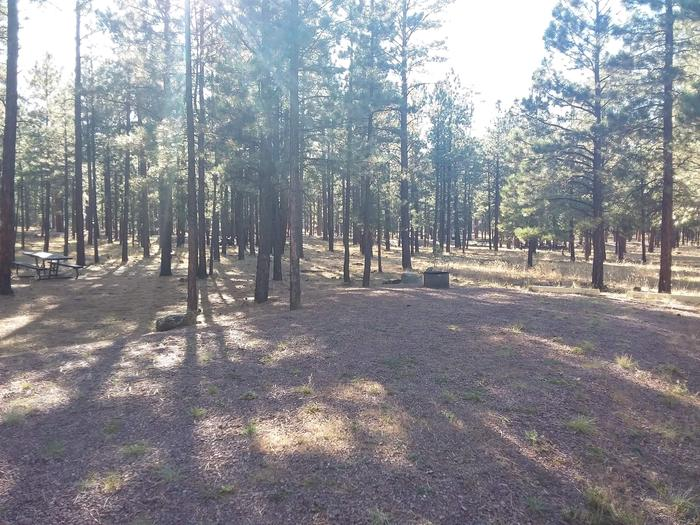 Grouse Loop Site 33 partially shaded with picnic table and fire ring