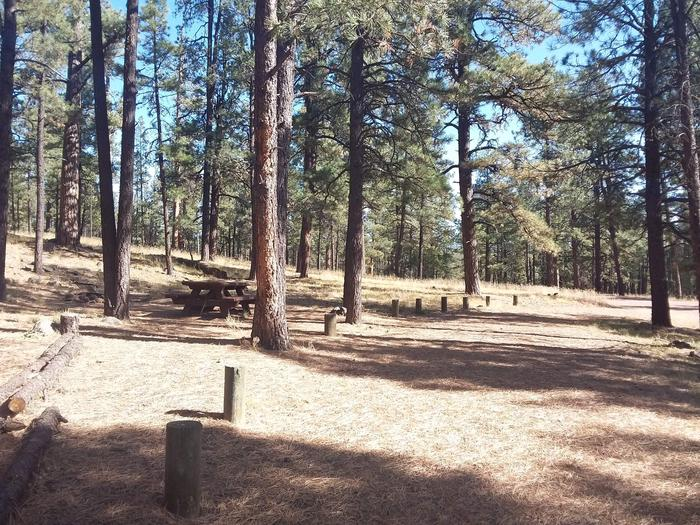 Site 29 with a fire ring, picnic table, and parking.