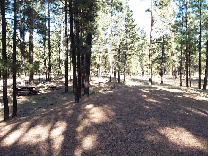 Beaver Loop Site 41 partially shaded with picnic table and fire pit