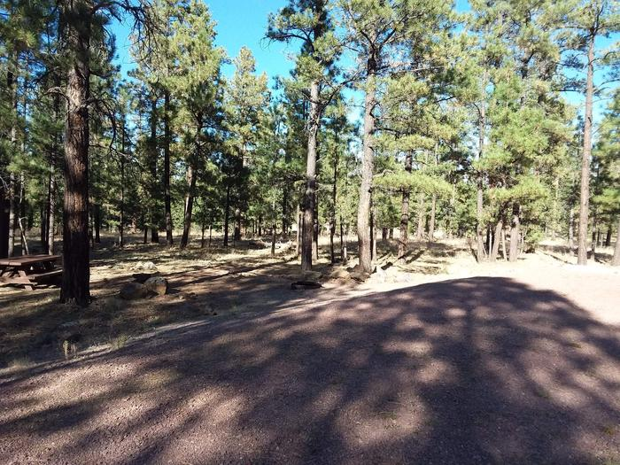 Beaver Loop Site 45 partially shaded with picnic table and fire ring