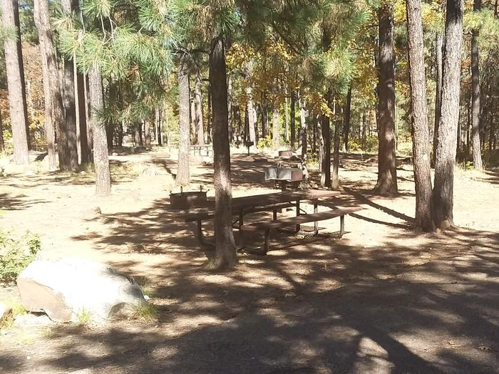 Site 66 with a tree in front of a table, fire ring, and grill. Campsite 66