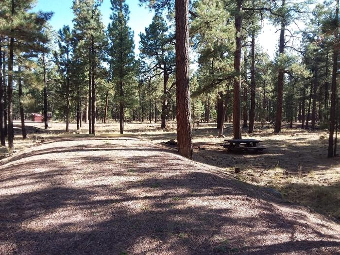 Wildcat Loop Site 55 partially shaded with picnic table and surrounded by forest