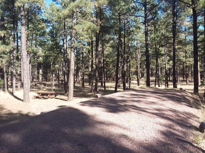Wildcat Loop Site 61 partially shaded with picnic table