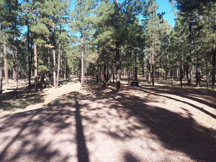 Wildcat Loop Site 67 partially shaded with picnic table and campfire ring