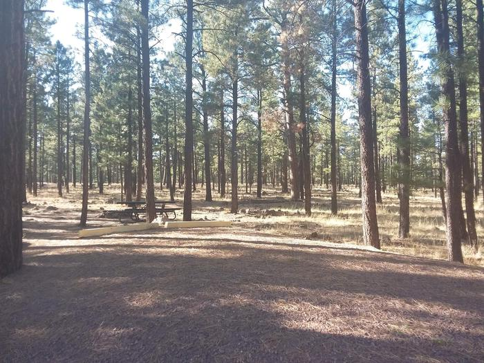 Wildcat Loop Site 73 partially shaded with picnic table
