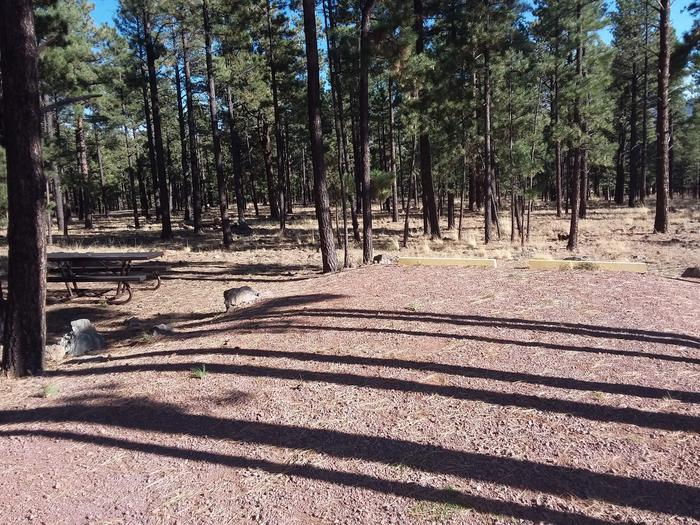Bear Loop Site 85 partially shaded with picnic table