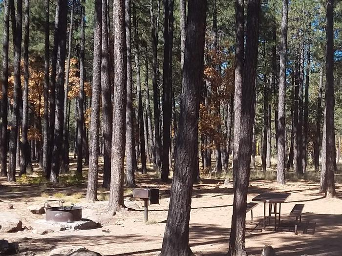 Site 89 with trees and campfire ring, grill, and table.Campsite 89