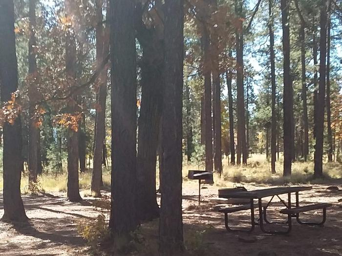 Site 102 table in the shade of trees. Campsite 102 Has a table, fire ring, and grill.