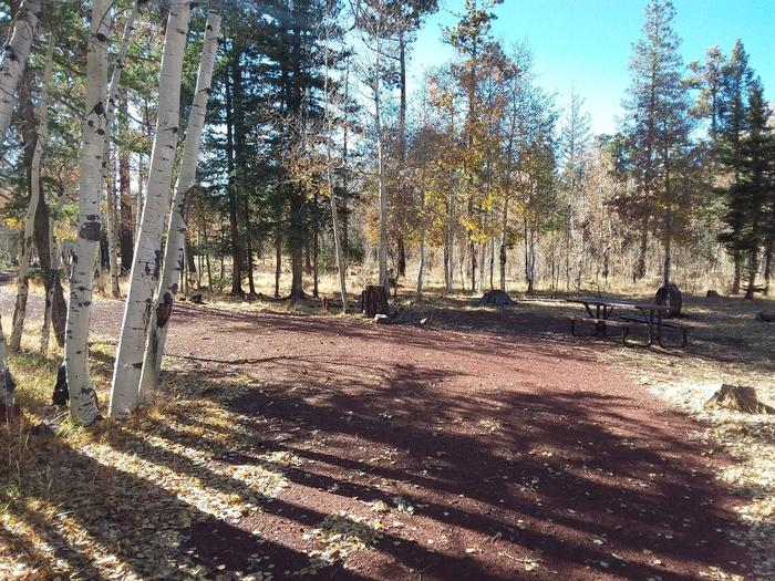 Campsite 13 partially shaded by birch trees with picnic table and campfire ring