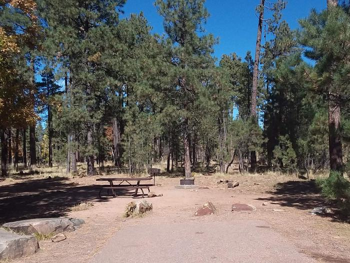 Site 119 with a table, grill, and fire ring in a clearing of trees.Campsite 119
