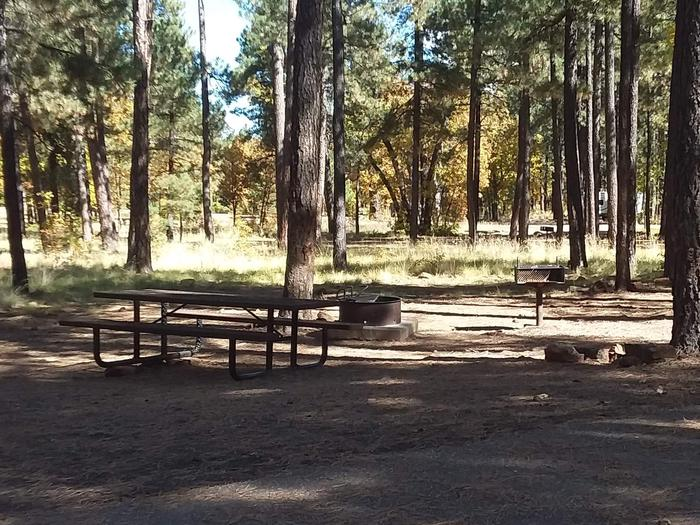 Site 123 with trees surrounding a table, campfire ring, and a grill in the shade.Campsite 123
