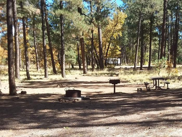 Site 125 in a clearing of trees there are the fire ring, table, and grillCampsite 125
