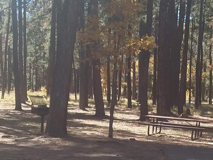 Site 131 table and grill with trees imbetween.Campsite 131